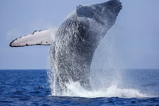 Whale Watching Boat Tour from Galle