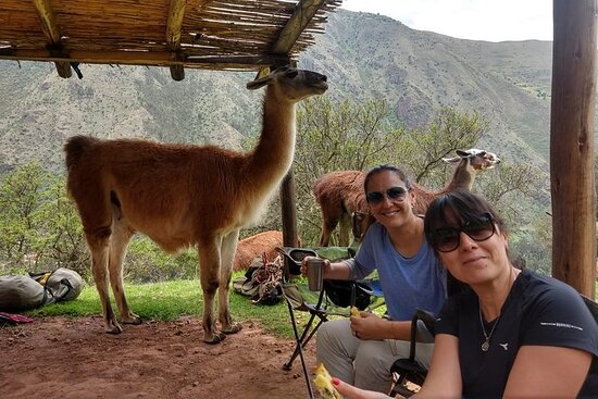 Family trek with llamas (Full Day)