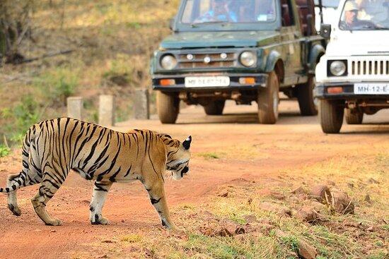 Nagpur to Bhopal via Pench & Satpura National Park