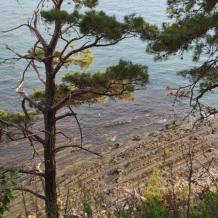Russian Black Sea Coast, Russland: Кемпинг PINE BEACH Chill Camp