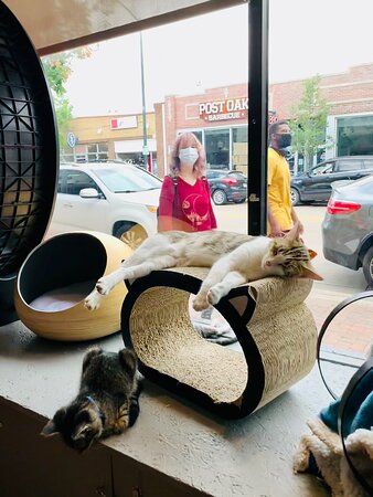 Enjoyed immensely visiting the kitties today! Everyone was so friendly and accommodating. Highly recommend the Denver Cat Company for locals and out-of-town visitors alike.