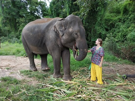 Would you like to visit us and share your love with the elephants?   Your continued support to help buy elephant's food is greatly appreciated at this time.🙏🐘♥️  If you would like to support our elephants during this difficult time you can help to buy food for them.  Here is Link for donation: https://www.paypal.me/cmelephanthome Or Inbox us here: http://m.me/cmelephanthome for other method to donate.  Please like and share this post! 🙏🐘♥️ The elephants thank you and we thank you