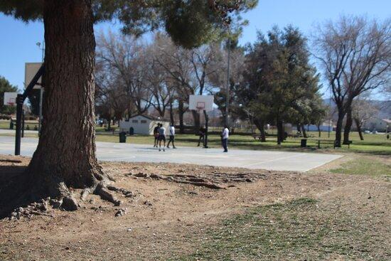 Quartz Hill, CA: Lots of trees