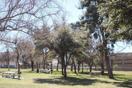 Quartz Hill, CA: Mote trees