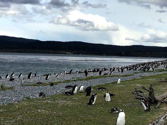 Canal de Beagle et promenade avec des pingouins (hiver) : cool