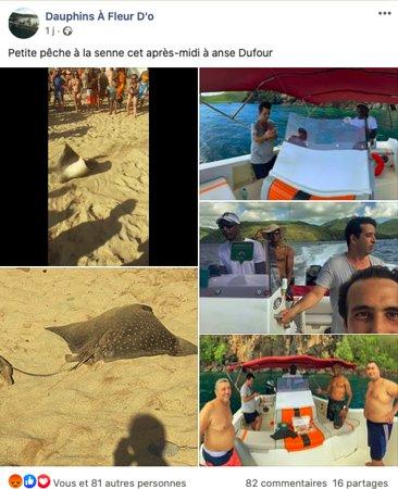 La publication qui a depuis été supprimée de leur page Facebook. En haut à gauche une vidéo d'une raie léopard agonisante sur le sable. Une espèce quasi menacée et protégée aux Antilles Françaises !!!