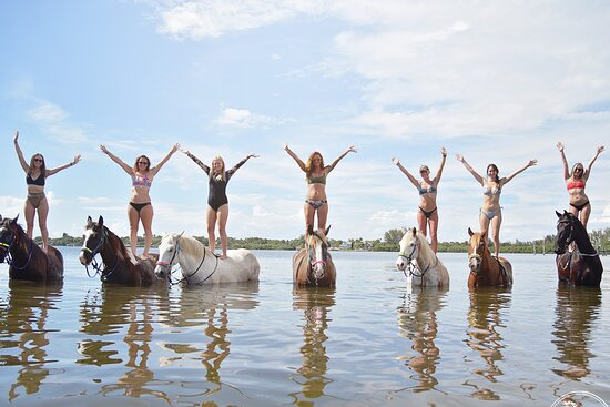 Florida Beach Horses