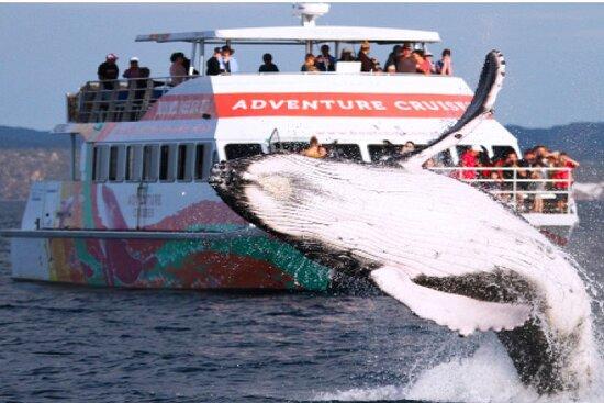 WhaleWatcher.com.au