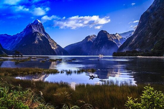 Premium Milford Sound Bus - Cruise - Fly Tour with Picnic Lunch from...