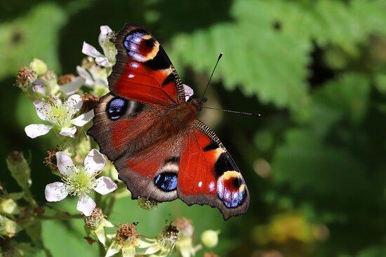 Schmetterlinge am Wegesrand