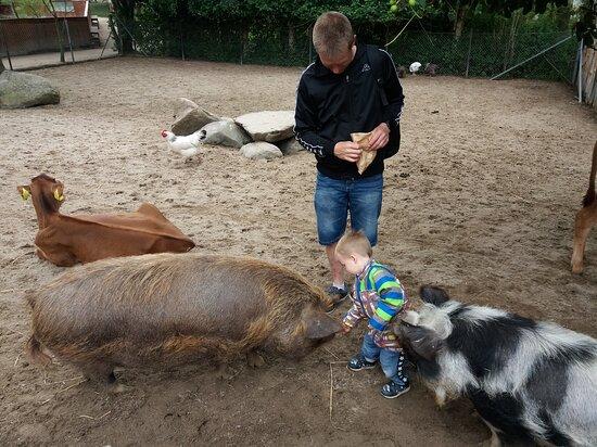 Snakke grise og kalve