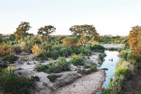 Londolozi Private Game Reserve, Südafrika: Londolozi Founders Camp