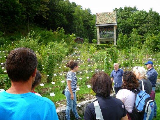 Visita guidata Giardino dei semplici di Zuglio Scuola di Naturopatia Hermete Sophia