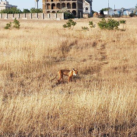 Uhlove: Мыс Лукум в Крыму , отличное место для кемпинге, могу отправить геоданные .👍