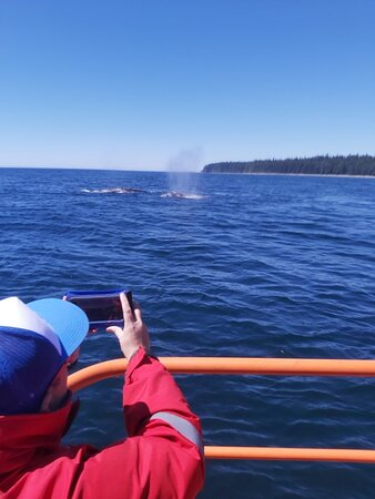 Port Renfrew Whale & Wildlife Watching – valokuva