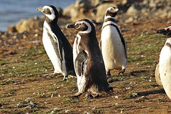 Caminata Guiada en Pingüinera en...