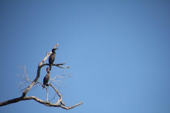 The abundant bird life, and the beautiful skies.