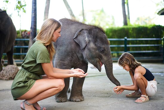 Baby Elephants naturally Born at the Park