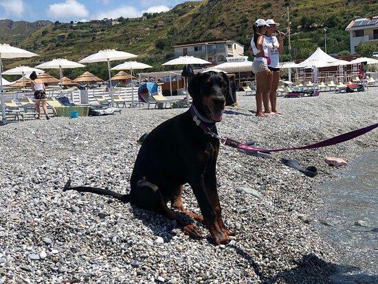 Bau Beach - Spiaggia per Cani