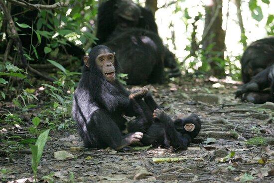 Gombe National Park照片