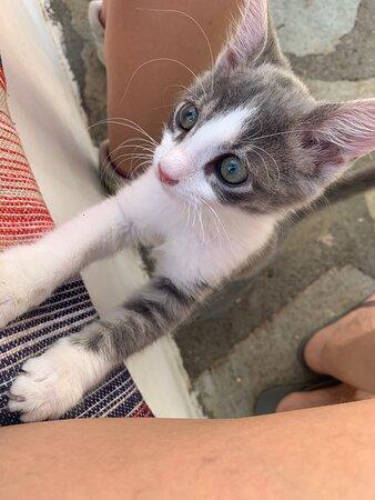 Skipy le chaton le plus mignon de la galaxie