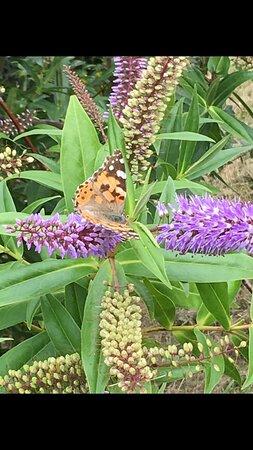 Shropshire, UK: Butterfly