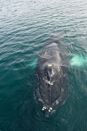 Beautiful Humpback Whale