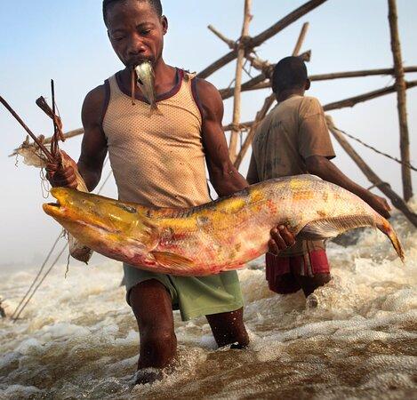 Republikken Kongo: Congo 42