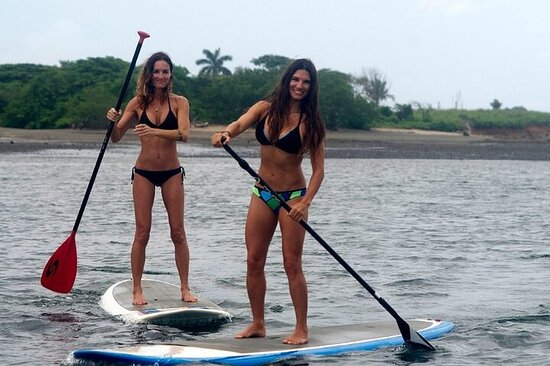 Stand Up Paddle Board Rental in Rose Bay