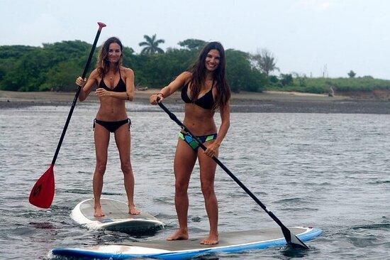 Alquiler de tablas de paddle surf en Rose Bay