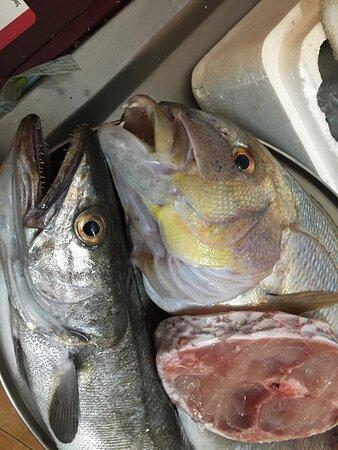Cod-Dentex-sea bream slice, all fresh!