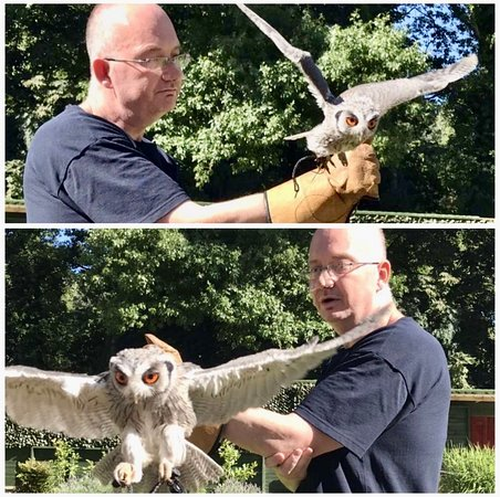 The Falconry Centre Hagley 2020 All You Need To Know Before You Go With Photos Hagley England Tripadvisor