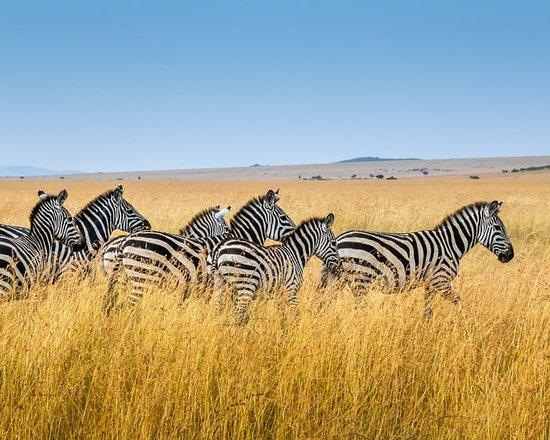 Jinja Tours And Safaris