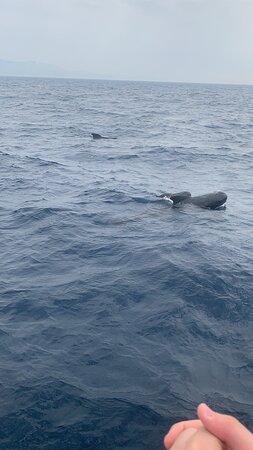 鯨魚和海豚之旅照片
