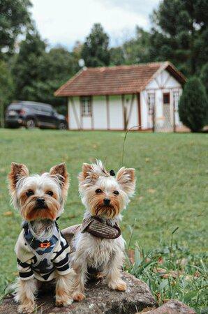 Chalé Toscana Pet Friendly