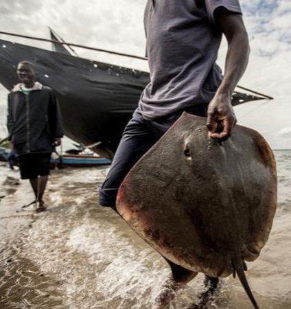 Mozambik: Mozambico 23