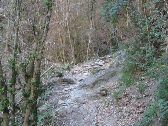 Randonnée La Lame de Facibelle Vue 24. Début du Sentier de Randonnée qui Monte Toujours !... après La Passerelle. Juillet 2020..