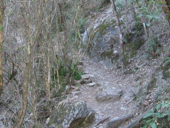 Randonnée La Lame de Facibelle Vue 23. Début du Sentier de Randonnée qui Monte Encore et Encore !... après La Passerelle. Juillet 2020.