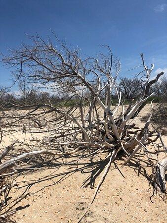 Remote natural beach