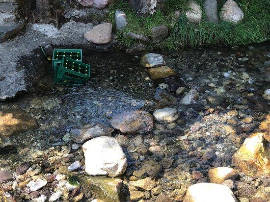 Somiedo Municipality, Spain: Sí, son dos cajas de sidra enfriando al paso de las frías aguas que acabarán en el Nalón antes de morir en el Cantábrico