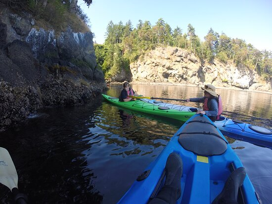 Half-Day Sea Kayaking Trip Near Olympic National Park: Cruising the cliffs at freshwater bay