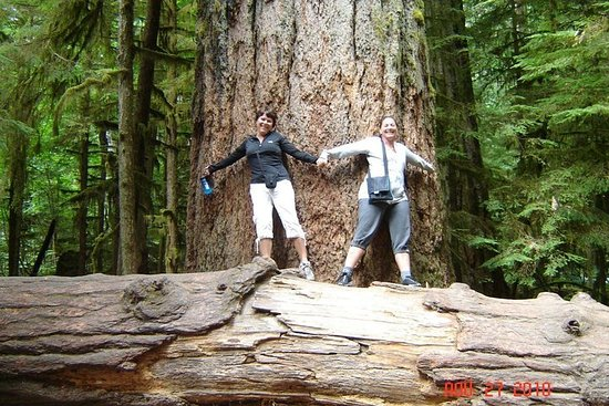 Waterfalls, Cathedral Grove Rainforest, and Coombs Adventure with...