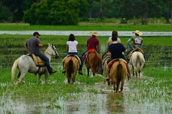 5-Days North Pantanal - Unearthing exotic treasures in the Pantanal...