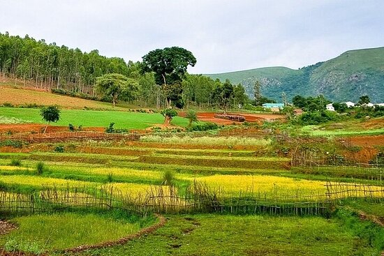 Arku Valley Day Tour from Vizag (Pickup from Hotel)
