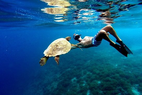 SWIM SURROUNDED by Sea Turtles and...