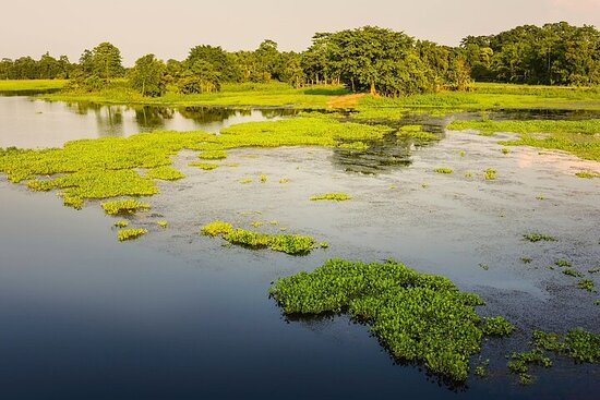 Day Trip to Majuli (Guided Private Tour from Guwahati)