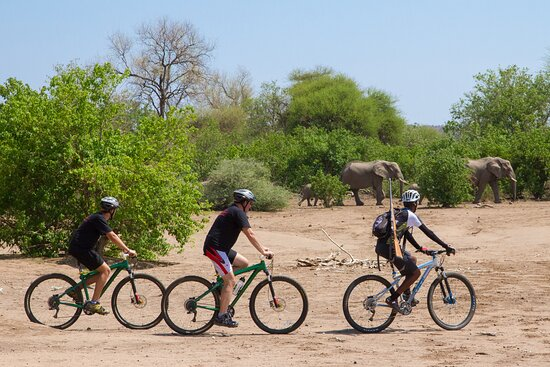 Mashatu Game Reserve, Botswana: CycleMashatu with qualified guides. Bike rides are tailored to to the guests' levels of ability. Bikes and helmets provided.