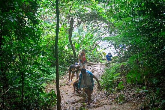 Tour de un día vívido en la selva...
