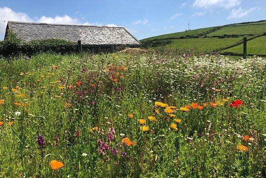 Jardines curativos y hierbas de la Isla de Man (grupo pequeño de...