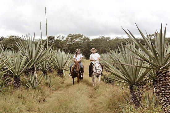 Promenade à cheval privée à Hacienda...